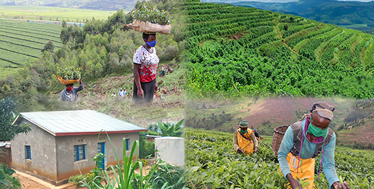 Strengthening climate resilience of rural communities in Northern Rwanda (Gicumbi Project)
